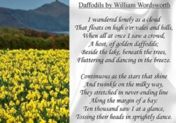 Amazing Daffodils By Williams Wordsworth Picture075