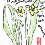 Amazing Daffodils Poem By William Shakespeare Pics598