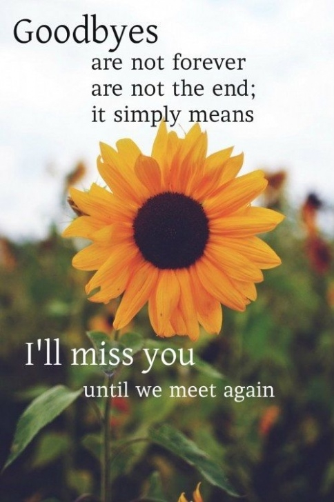 Amazing Famous Poems About Sunflowers Photo209