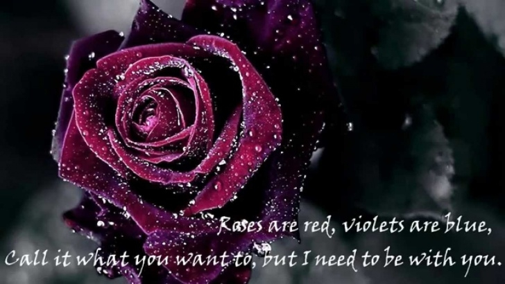 Amazing Have You Ever Loved A Rose Poem Picture178