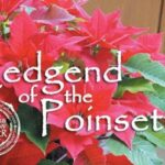 Amazing Legend Of The Poinsettia Poem Pics029