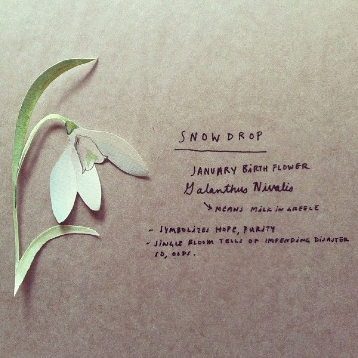 Amazing Little Snowdrop Poem Picture549