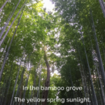 Amazing Poem About Bamboo Tree Pic341