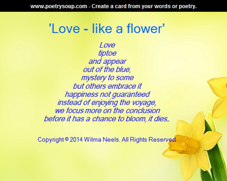 Amazing Poetry And Flowers Pics100