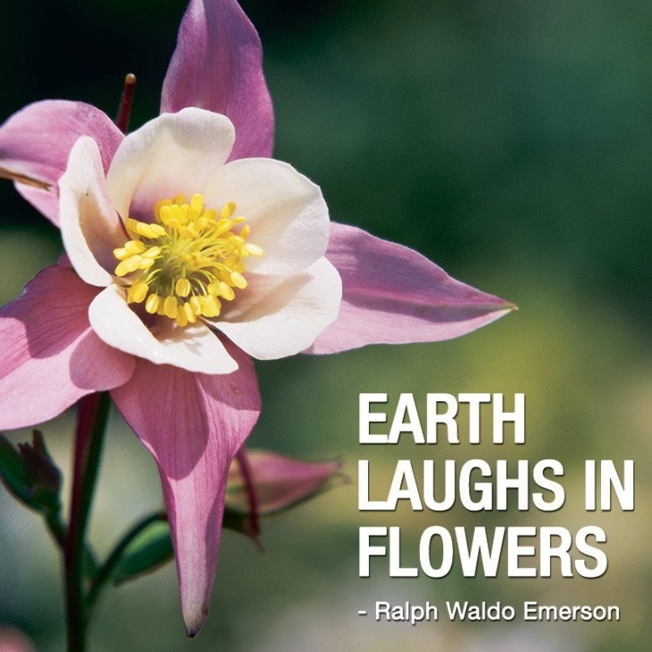 Amazing Ralph Waldo Emerson Earth Laughs In Flowers Pic340