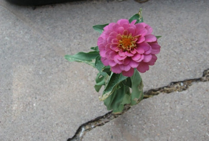 Amazing The Flower That Grew From The Concrete Photo311