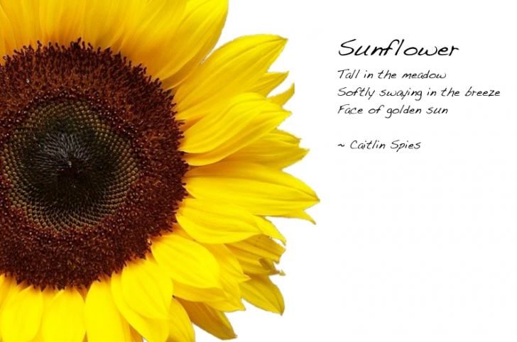 Amazing The Sun And Her Flowers Sunflower Poem Image437