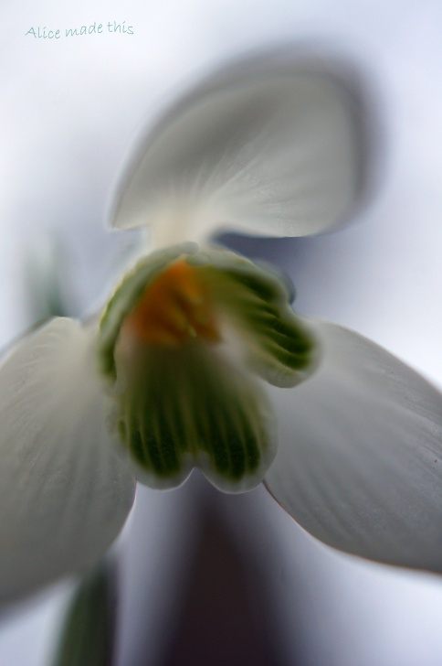 Amazing To A Snowdrop By William Wordsworth Image614