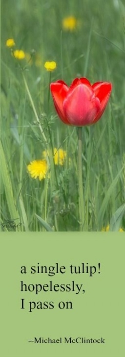 Amazing Tulip Poems By Famous Poets Photo680