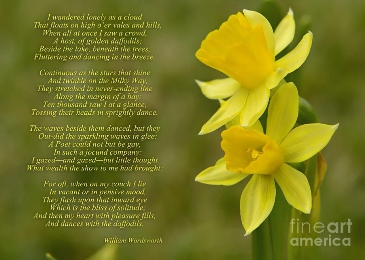 Awesome Daffodil Flower Poem Pics796