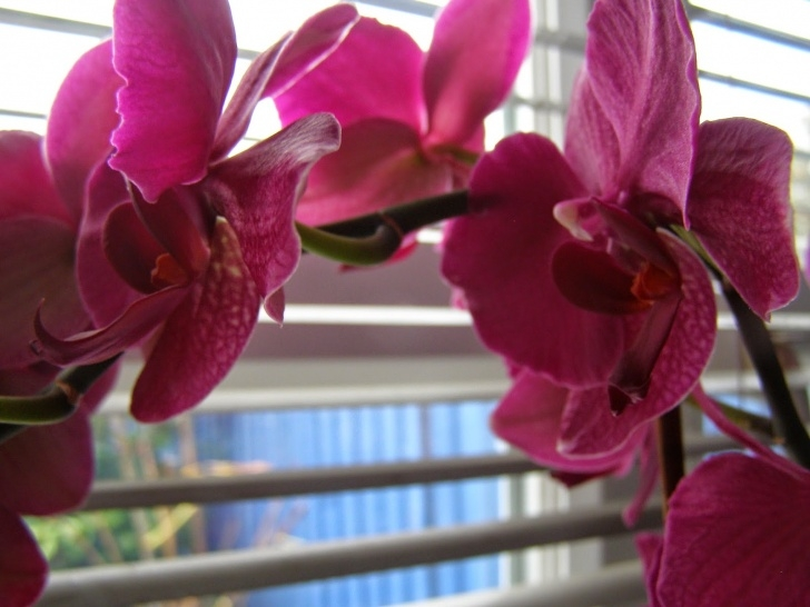 Awesome Keeping Orchids Poem Pic286