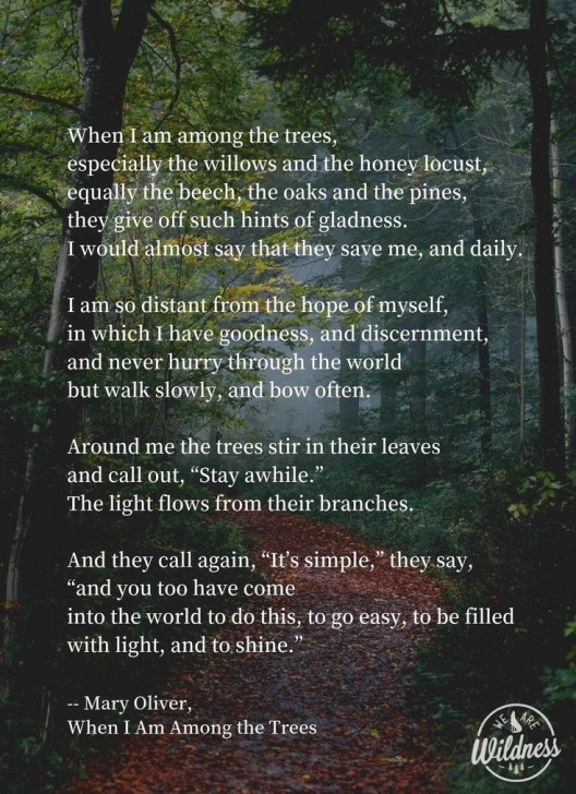 Awesome Mary Oliver The Gardener Photo582