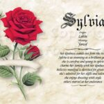 Awesome My Rose Poem Pic418