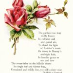 Awesome Pink Rose Poem Pics429