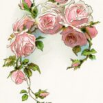 Awesome Pink Rose Poem Picture305