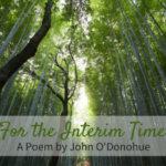 Awesome Poem About Bamboo Tree Photo467