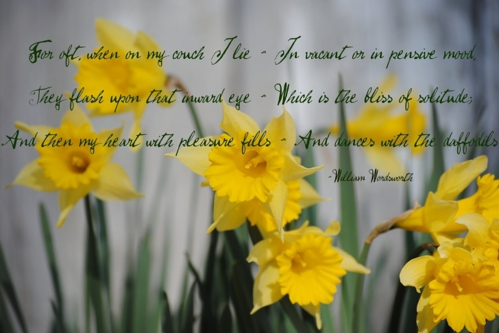 Awesome Poem To Daffodils Photo180