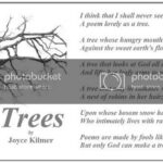 Awesome Poems About Acorns And Oak Trees Photo697
