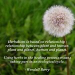 Awesome Poems About Herbs Pics917