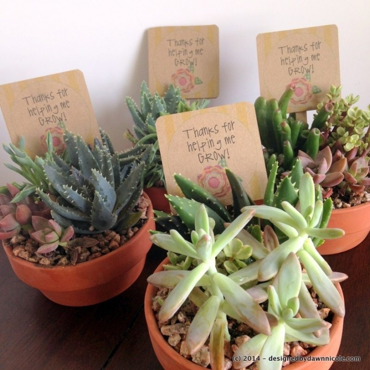 Awesome Poems About Succulents Pics774
