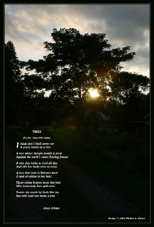 Awesome Poems About Trees Pics966