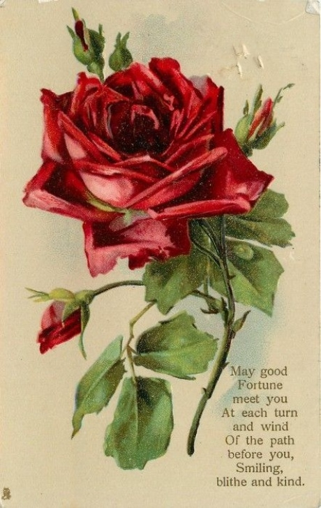 Awesome Rose Bud Poem Pics647