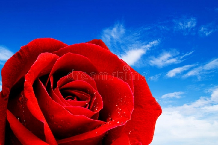 Awesome Rose Is Red Sky Is Blue Pic409