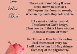 Awesome She Is The Most Beautiful Flower Poem Picture692