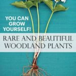 Awesome So You Plant Your Own Garden Poem Picture282