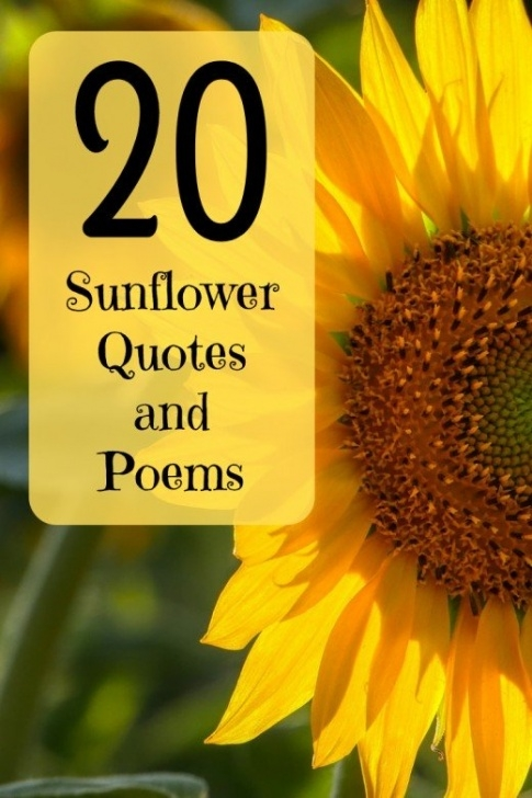 Awesome Sunflower Love Poem Pic953