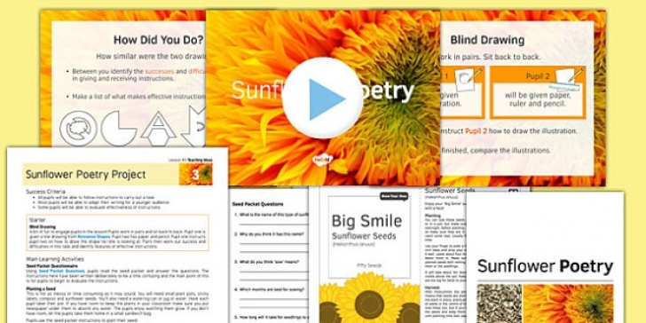 Awesome Sunflower Poem In English Photo135