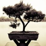Awesome The Bonsai Tree Poem Photo336