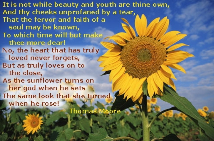 Awesome The Sun And Her Flowers Sunflower Poem Picture521