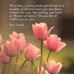 Awesome Tulip Poems By Famous Poets Photo688