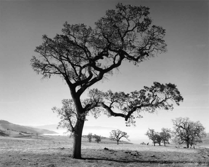 Awesome Under The Old Oak Tree Poem Picture454