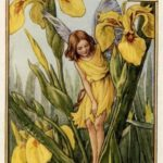 Best Iris Flower Poem Photo235