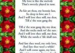Best Love Is Like A Rose Poem Picture724
