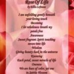 Best Poems About Roses And Life Photo540
