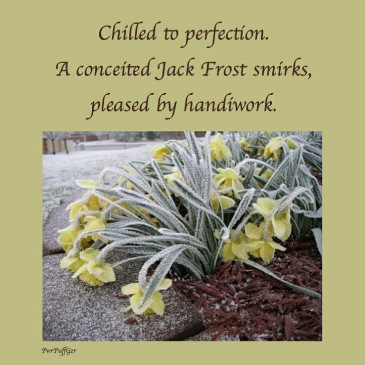 Best Robert Frost Daffodils Image589
