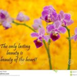 Best Rumi Flower Poem Picture423