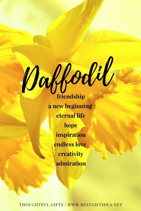 Best Short Poems About Daffodils Image303