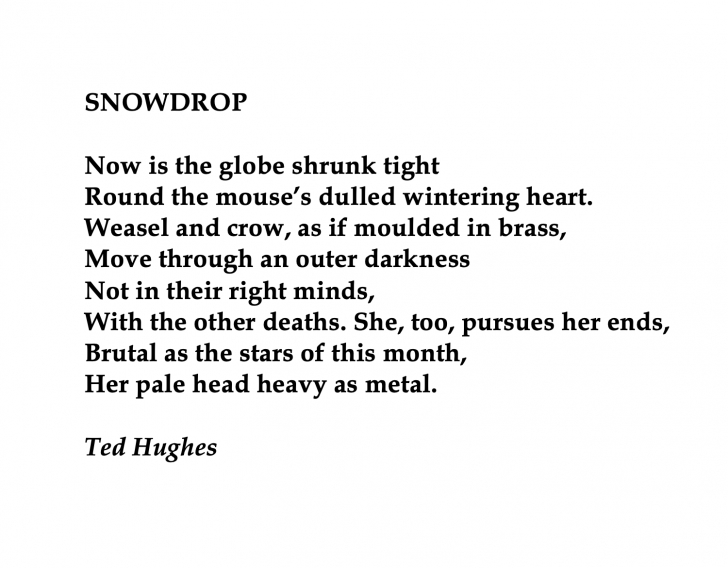 Best Snowdrop Ted Hughes Poem Pics349