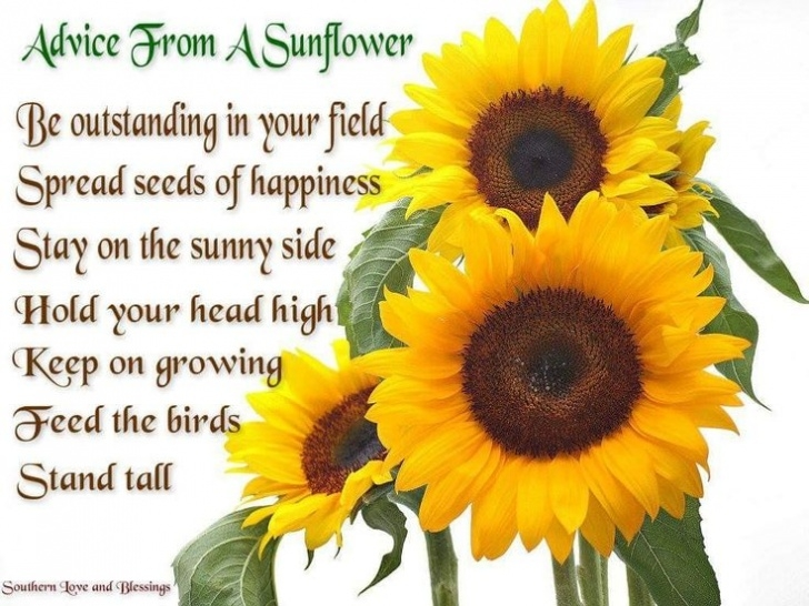 Best Sunflower Love Poem Picture590