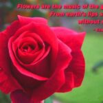 Best The Red Flower Poem Picture691