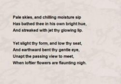 Best The Yellow Violet By William Cullen Bryant Photo037