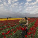 Creative Bio Poem About Flower In The Field Image937