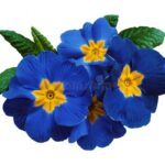 Creative Flowers Are Red Violets Are Blue Pic282