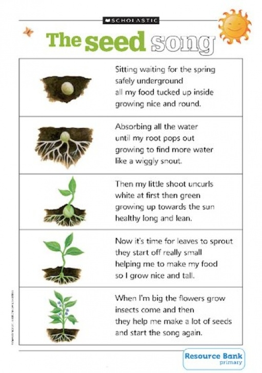 Creative Poem The Plant Picture281