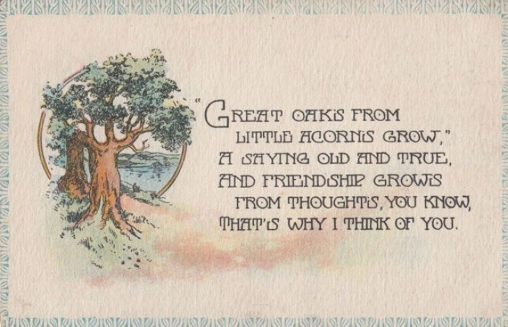 Creative Poems About Acorns And Oak Trees Picture626