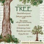 Creative Poems About Trees And Life Pics366